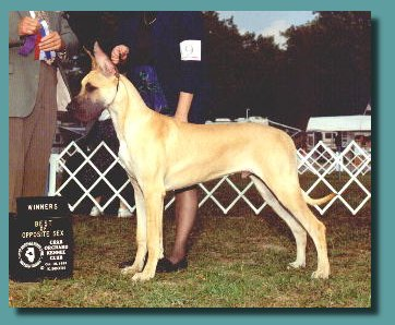 Raymond winning WD/BOW at 7 months old
